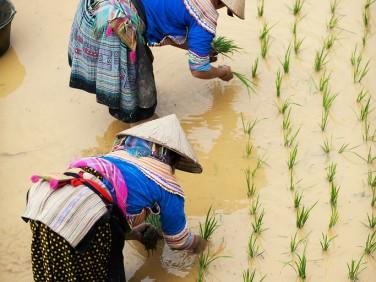 Décryptage : Répondre aux défis du XXIe siècle avec l'agro-écologie