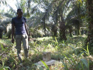 L'aide au développement et le cas Feronia Inc en RDC – GRAIN