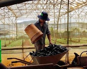 Le programme Grow et la mainmise des multinationales sur l'agriculture – GRAIN