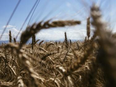 Tribune : aide au développement, place enfin à l'agriculture !