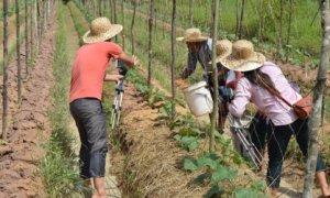 au-cambodge-favoriser-la-diffusion-de-lagroecologie-par-et-pour-les-agriculteurs%c2%b7trices