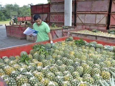 Des fruits au goût amer au Costa Rica et en Équateur