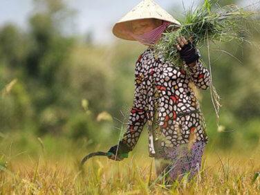 Un besoin urgent de transformation des politiques foncières dans la région du Mékong