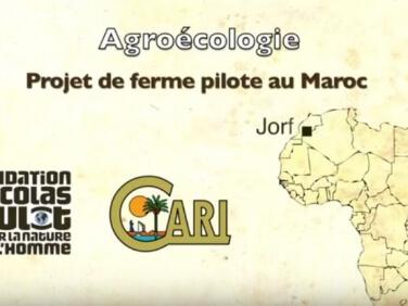 A quelques jours de la COP21, découvrez le projet de ferme pilote dans l'oasis de Jorf au Maroc du Cari