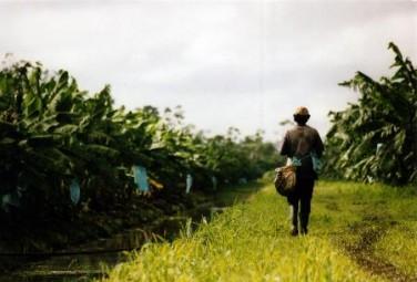 Séminaire C2A/Costea : Efficience économique de l'usage de l'eau agricole par les agricultures familiales