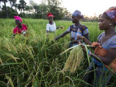 COP22: les pays du Sud doivent être au cœur de l'application de l'Accord de Paris