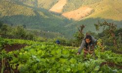 structuration-de-reseaux-et-partage-des-connaissances-pour-le-developpement-de-lagroecologie-en-asie-du-sud-est