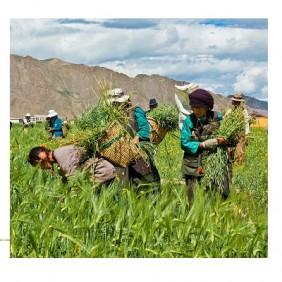 Agricultures paysannes et atténuation du changement climatique: quelques éléments de compréhension