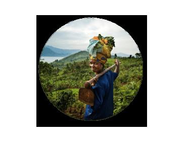 Les enjeux des filières agricoles internationales: comprendre pour sensibiliser