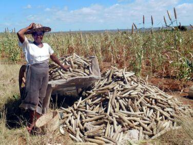 Des solutions pour le développement du Grand Sud malgache