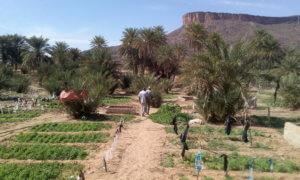 concertation-et-autonomisation-des-communautes-agro-pastorales-en-mauritanie