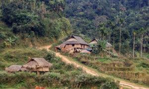 les-femmes-gardiennes-des-forets-au-vietnam