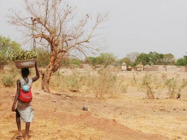 Terres, sols et agriculture : des négociations climatiques sans racines ? – Cari