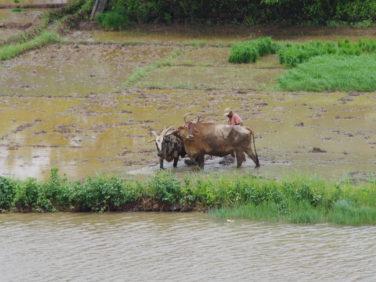 Séminaire «Politiques publiques et adaptation des agricultures aux changements climatiques. Bilan et recommandation»