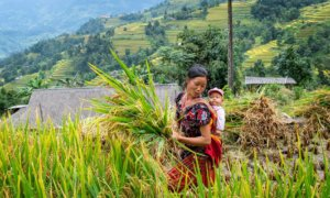 faire-progresser-les-droits-fonciers-et-forestiers-et-les-pratiques-dinvestissements-responsables-dans-la-region-du-mekong