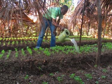 Répondre aux défis du XXIe siècle avec l'agro-écologie : pourquoi et comment ?