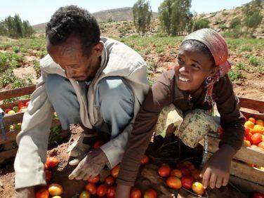 Sécurité alimentaire en Afrique subsaharienne – Agence Française de Développement