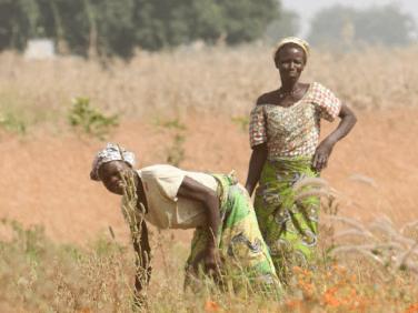 Pour une PAC cohérente avec le développement des agricultures paysannes des pays du Sud – Les Notes de SUD #20