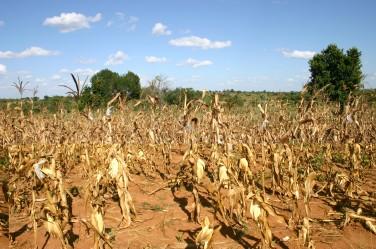 Soutenir l'agriculture familiale et paysanne