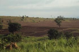 Production d'agrocarburants et accaparements de terres en Guinée: conséquences de la politique énergétique de l'UE – Alimenterre