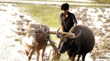 Document de position «Agriculture familiales et paysannes et lutte contre les changements climatiques: ouvrons les yeux!»