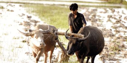 document-de-position-agriculture-familiales-paysannes-lutte-contre-changements-climatiques-ouvrons-yeux