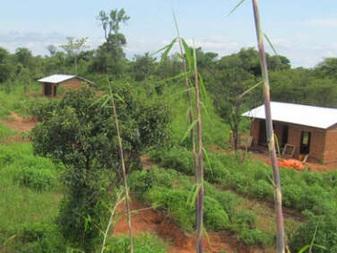 L'agroforesterie au secours du « poumon de l'Afrique » – Gret