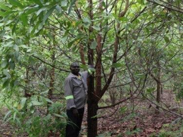 Un nouveau projet d'agroforesterie en RDC