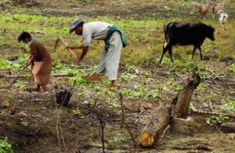 Après 5 ans d'existence, c'est l'heure du constat pour Envol Vert, association de lutte pour la préservation de la forêt