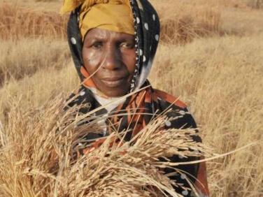 Rapport : L'état de l'insécurité alimentaire dans le monde – FAO