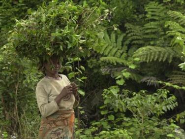 Définition de la stratégie de l'Union européenne pour la protection de la biodiversité en Afrique – Gret