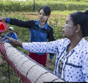 Agroécologie au Myanmar: «aujourd'hui, 80% des produits que j'utilise sont d'origine naturelle»