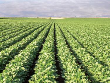 De l'agriculture industrielle à des systèmes agroécologiques diversifiés – IPES-Food