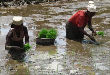 L'agriculture contractuelle peut-elle contribuer au renforcement des agricultures paysannes?
