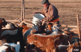 Les dernières Notes de la C2A sur le pastoralisme, un mode de vie résilient face à de nombreux défis, sont disponibles