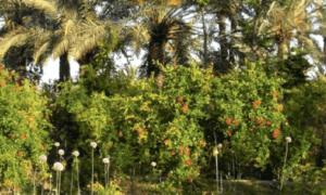 oasis-importance-de-lagrobiodiversite