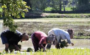 Rapport annuel sur l'agriculture contractuelle  – C2A