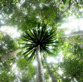 Le mécanisme REDD+ et les paiements pour services environnementaux permettront-ils de s'attaquer aux causes sous-jacentes de la déforestation ? – Gret
