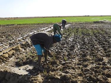 Les effets de la PAC sur les paysanneries des pays du Sud