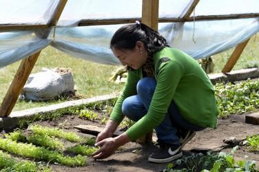 Notes de la C2A n° 17: Pour une reconnaissance politique de l'efficacité et des performances des agricultures paysannes!