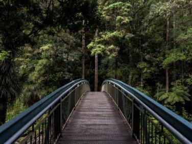 Les forêts font partie de la solution à la crise climatique