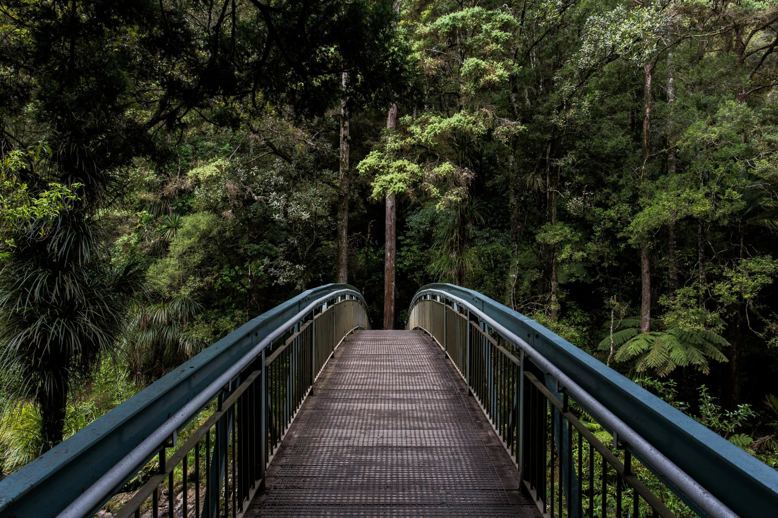 un pont vers la forêt tropicale