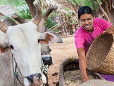 PAC et APE : quelle cohérence avec le développement des agricultures familiales du Sud ?