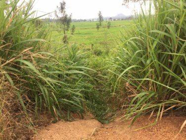 Pour une politique agricole commune solidaire avec les pays du Sud
